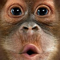 Big Face Kinder T-Shirts