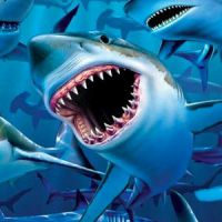 Meerestiere Kinder T-Shirts