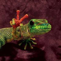 Reptilien Kinder T-Shirts