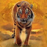 Zootiere T-Shirts